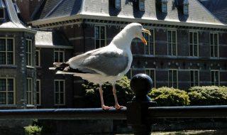 Rammelende studie naar opleidingsniveau en PVV-steun vindt helaas gretig aftrek